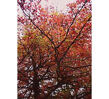 Retro Fall Photographic Print