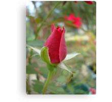 LITTLE RED ROSEBUD Canvas Print