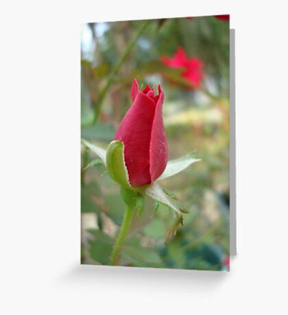LITTLE RED ROSEBUD Greeting Card