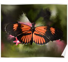Black and Orange Butterfly Poster