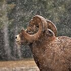Snowed Ram by JamesA1