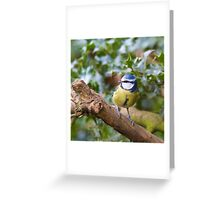 Blue Tit (Cyanistes Caeruleus) Perched in a Tree Greeting Card