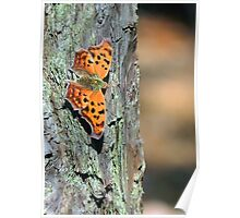 Orange Question Mark Butterfly Poster