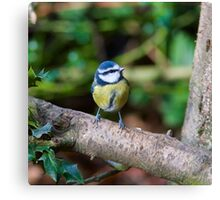 A Blue Tit (Cyanistes Caeruleus) Perched on a Branch Canvas Print