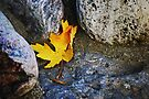 Homage to a leaf... by Laurie Minor