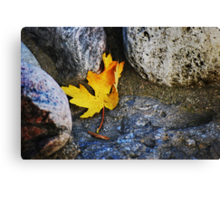 Homage to a leaf... Canvas Print