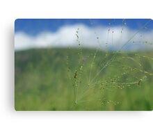 Grass stalk Canvas Print