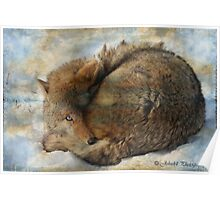 Canadian wildlife with textures   Poster