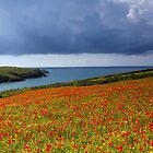 Pentire poppy panorama by Snowyturner