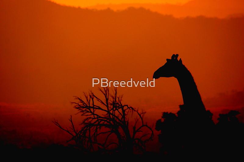 Giraffe silhouette by PBreedveld