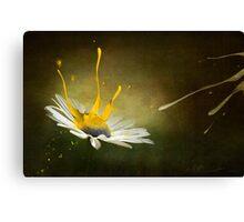 Painting Daisy Canvas Print