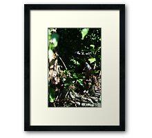 Literary Garden Gnome Framed Print