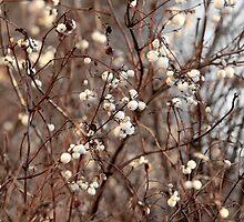 Snowberry     by mrivserg