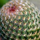 Prickle Potential  by Zack Parton