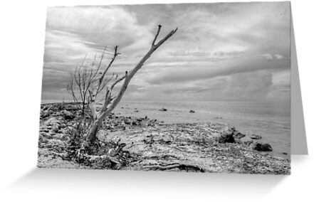 That dead tree holds a clue to the location of the pirate's treasure... by Jeremy Lavender Photography
