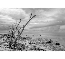 That dead tree holds a clue to the location of the pirate's treasure... Photographic Print