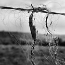 Hair On Barbed Wire - # 2 by Jazzdenski
