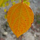 Turning Aspen Leaf by KimSha