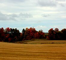 Fall Colors by Greta  McLaughlin