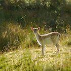 Bambi by cj1970