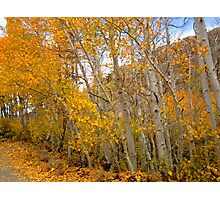 Falling Colors Photographic Print