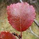 Red Autumn Leaf by KimSha