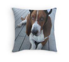 Shango Kitty 2012 Throw Pillow