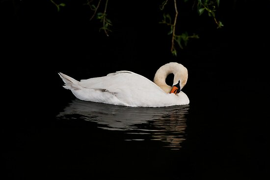 Swan by Ellesscee
