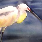 Snowy Egret by watercolors1