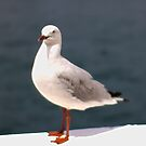Gull by AHakir