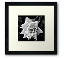 Black and White Rose Framed Print