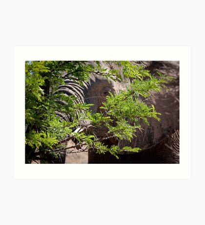 Spring greens! Mabula, Northern Province, South Africa Art Print