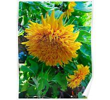 Sunflower Odyssey Poster
