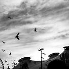 The Birds Swirling by Joel McDonald