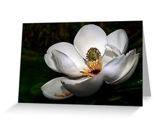 Magnolia Grandiflora Greeting Card