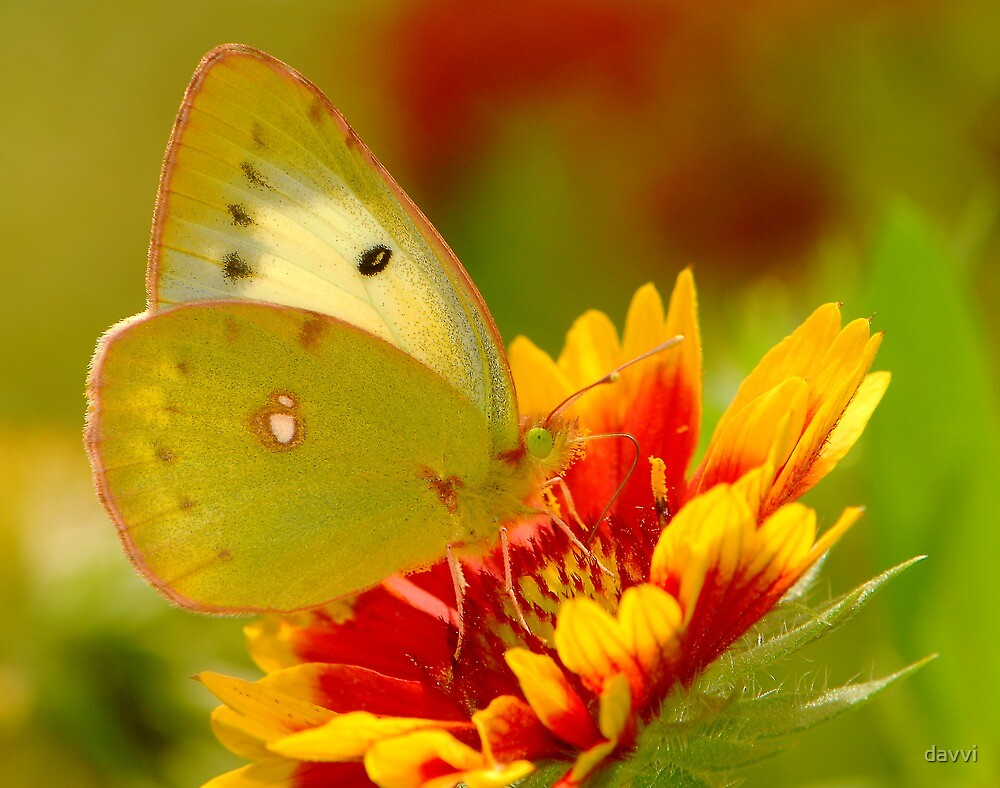 colourful day by davvi