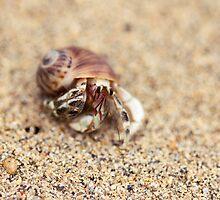 Big Crab Eyes by Josie Eldred