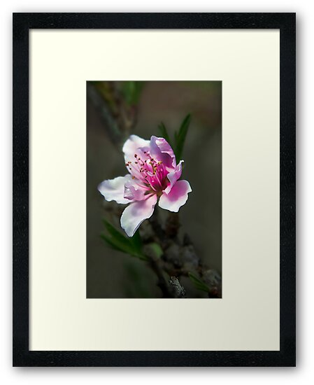 First Bloom by Heather Friedman