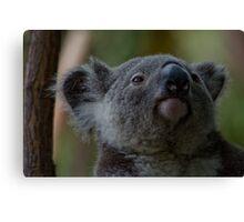 Cuddly Koalas Canvas Print
