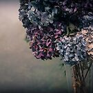 Hydrangea in the Fall by Annie Lemay  Photography