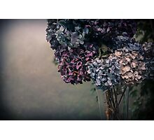 Hydrangea in the Fall Photographic Print