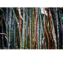 Messages on Bamboo Photographic Print