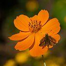 Orange by MrJohnny68