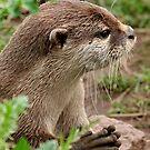 Praying Otter by AnnDixon