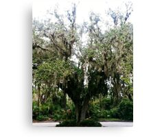 Tree of the Parking Lot Canvas Print