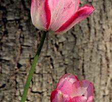 Tulip Top - In the Pink by Sally Haldane
