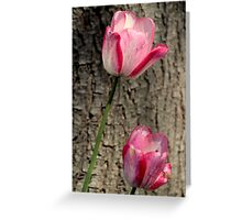 Tulip Top - In the Pink Greeting Card