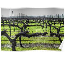 Ferngrove Vineyard Poster