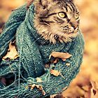 Maine Coon Cat in a Scarf by Ryan Conners