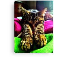 Check my Paws :) Canvas Print